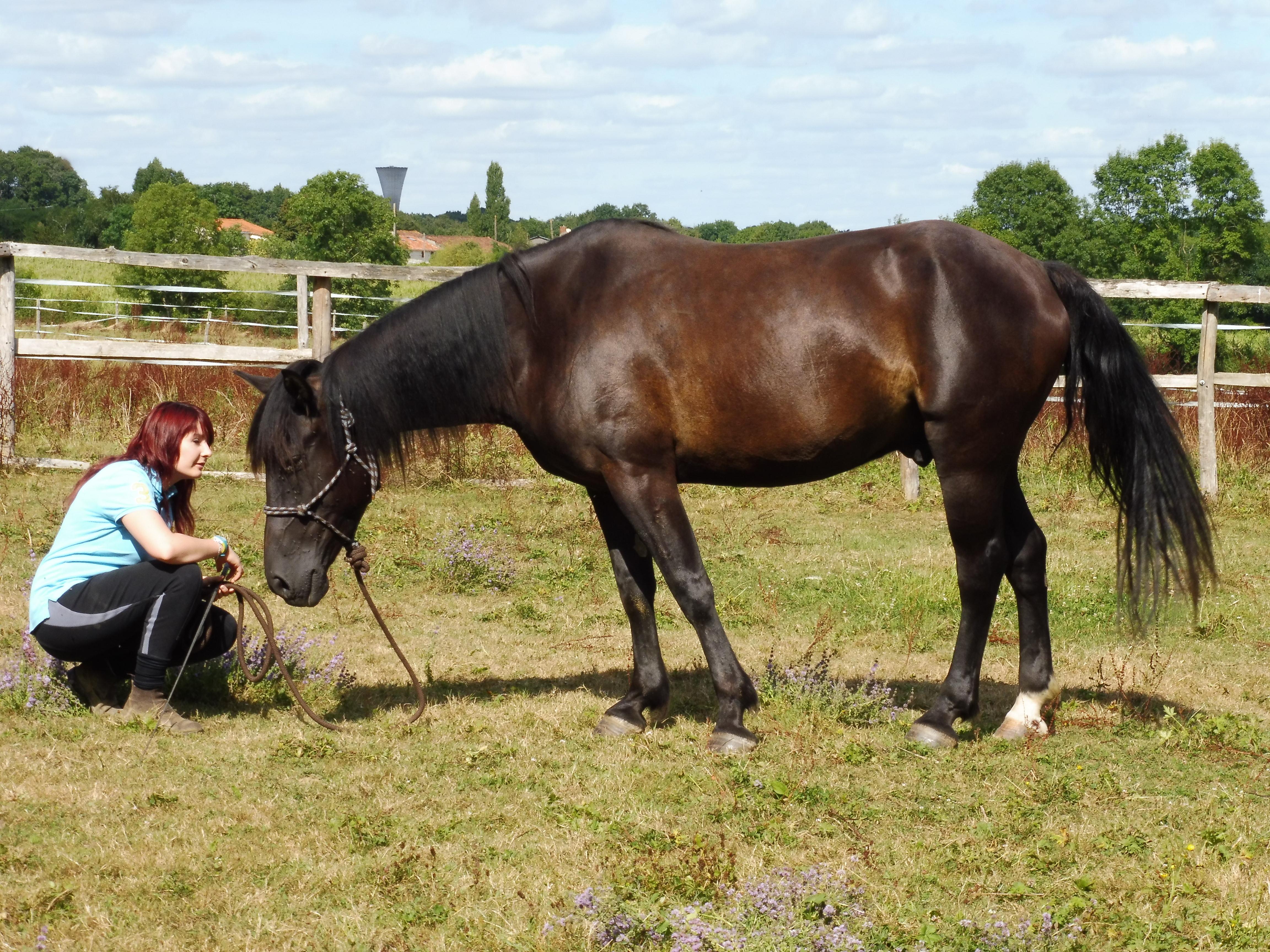 monitrice d'équitation indépendante en Vendée